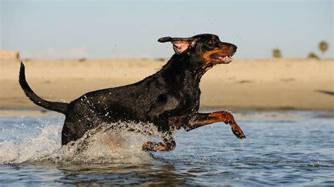 cheapest dog breeds     love bankratecom