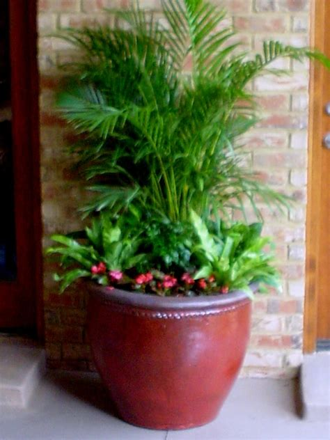 potted plants for outdoors 301 moved permanently