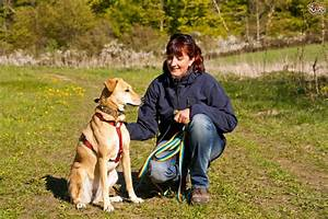 walking the dog three common challenges you might With the dog walking company