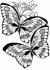 Ausmalbilder, Schmetterling