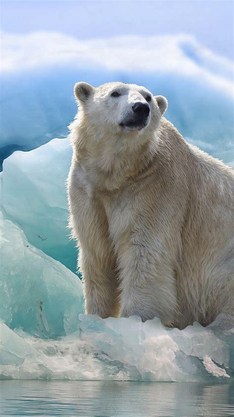 polar bear  penguin iceberg  iphone