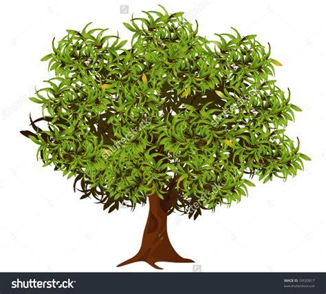 Tree Clipart Neem Tree Clipart 101 Clip