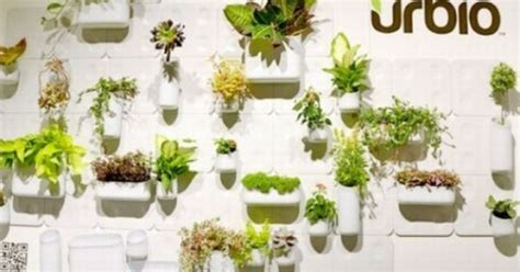 grow plants on walls of your house with urbio plants