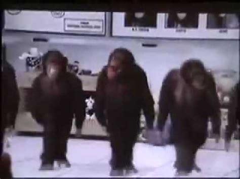 riverdance monkeys car driving monkey youtube