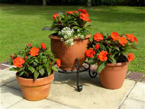 potted trees for patio choosing garden containers enjoy container gardening 4373