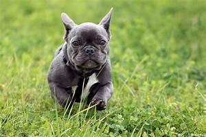 Hundebekleidung Französische Bulldogge : elli unsere franz sische bulldogge landschafts und naturaufnahmen ~ Frokenaadalensverden.com Haus und Dekorationen