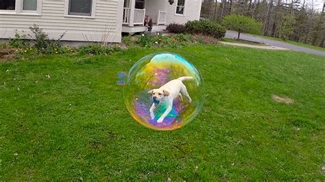 15 Perfectly Timed Photos