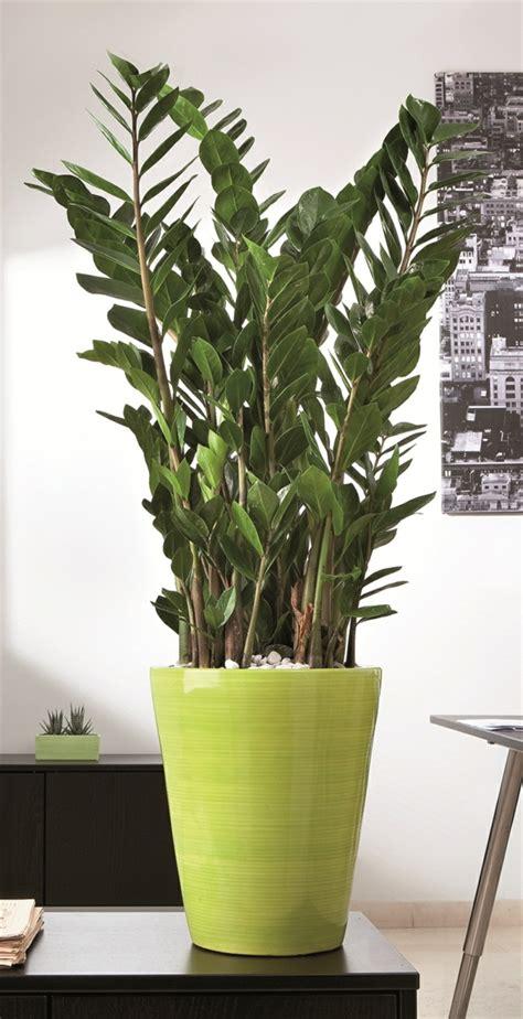 Zimmerpflanzen Modern moderne zimmerpflanzen zimmerpflanzen modern beste inspiration f r