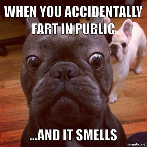 French Bulldog Meme - 63 best frenchies images on pinterest fluffy pets dog cat and adorable animals