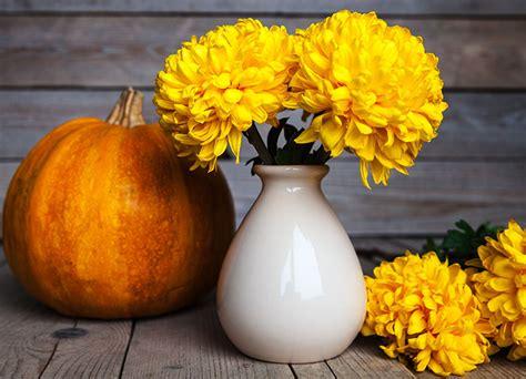 Was Im Herbst Im Garten Machen by Herbstbl 252 Diese Pflanzen Bluehen Im Herbst Auf Balkon