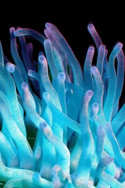 Ocean Anemone Sea Nature Coral Reef Gifs