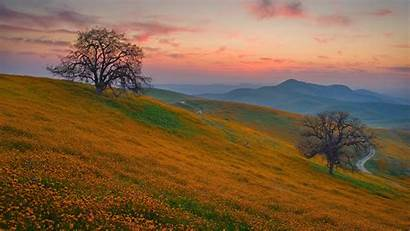 Flowers Trees Landscapes Mountains Wallpapers Plants Prado