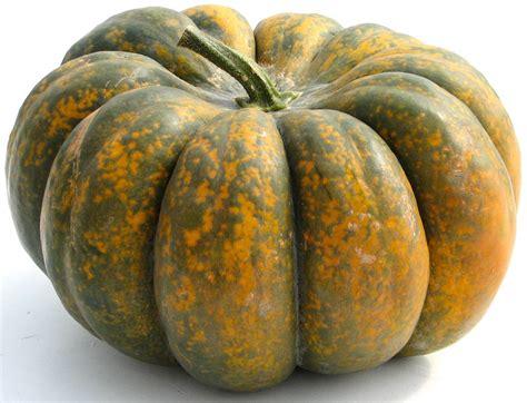types of pumpkins hutchinson farm heirloom pumpkins