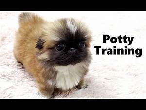 online frozen games for toddlers having trouble potty With trouble potty training dog