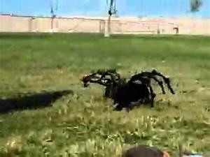 Radar Qui Flashe Le Plus : l 39 araign e la plus grosse au monde youtube ~ Medecine-chirurgie-esthetiques.com Avis de Voitures