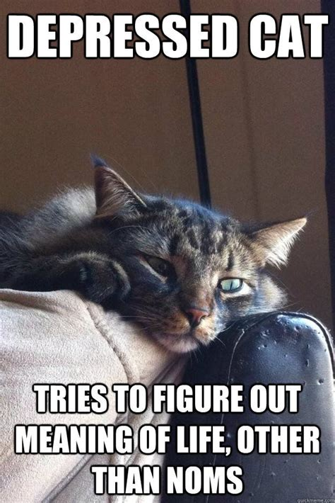 Depressed Cat Meme - 106 best viral memes images on pinterest cat memes kitty cats and cats