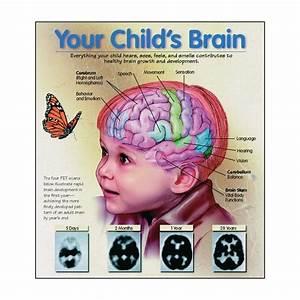 Babysitting Nanny Jobs Your Child 39 S Brain