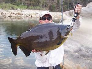 world record biggest fish ever caught big fishes of the ...