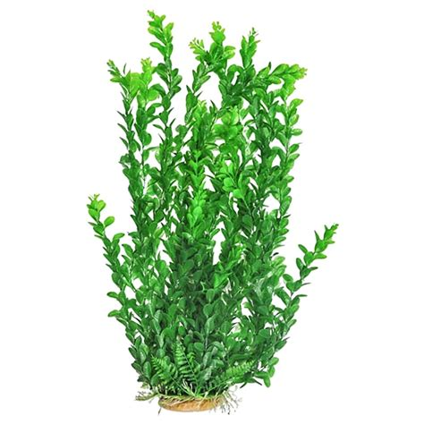 aquatop aquatop medium leaf aquarium plant light green aquarium plants