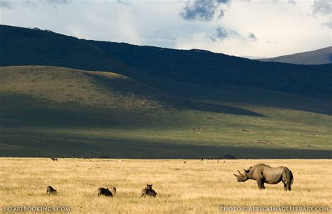 Ngorongoro Crater  Travel Guide, Map & More