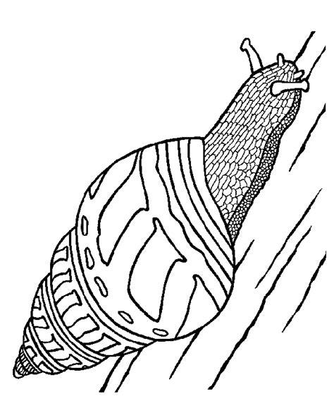 Coloriage animaux imprimer génial escargot coloriage maternelle. Meilleur Coloriage Hugo L escargot En Ligne 88 sur Coloriage idée with Coloriage Hugo L escargot ...