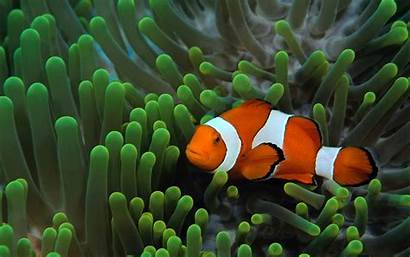 Backgrounds Fish Ocean Wallpapers Cool Background Plants