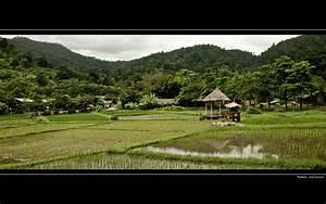 Wallpaper / desktop background Thailand Rice Field 1920x12 ...