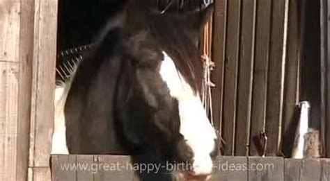 happy birthday horse style  pets ecards greeting