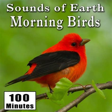 early morning wild birds chirping and activity songbirds