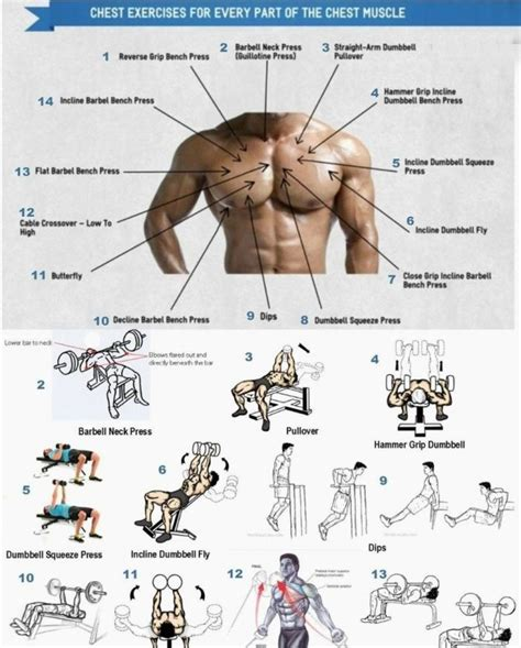 basic exercises  chest muscle workout exercises