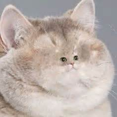 cat heavy breathing 1000 images about heavy breathing on heavy