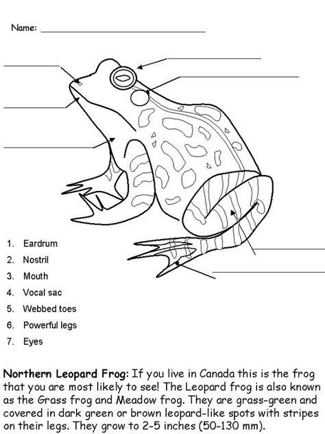 frog activities  kids activity shelter