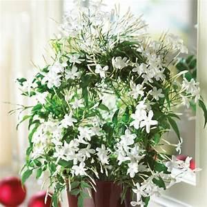 Zimmerpflanzen Für Wenig Licht : zimmerpflanze wenig licht 13 pflegeleichte bl hende zimmerpflanzen ~ Sanjose-hotels-ca.com Haus und Dekorationen