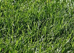 Green Grass – Photos Public Domain