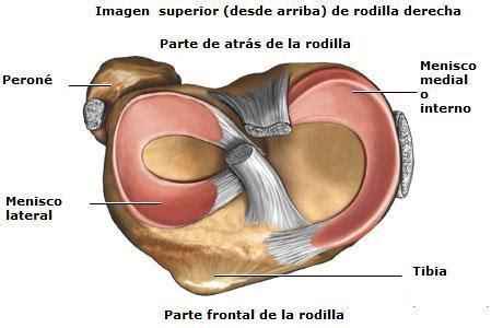 Lesione Corno Posteriore Menisco Interno Meniscos Definici 243 N Anatom 237 A Ubicaci 243 N Funci 243 N