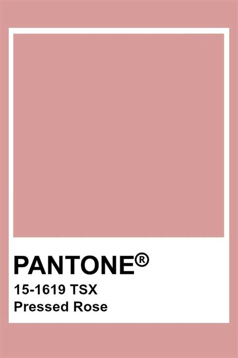 pressed rose paint color pantone pressed rose personal palette in 2019 pantone