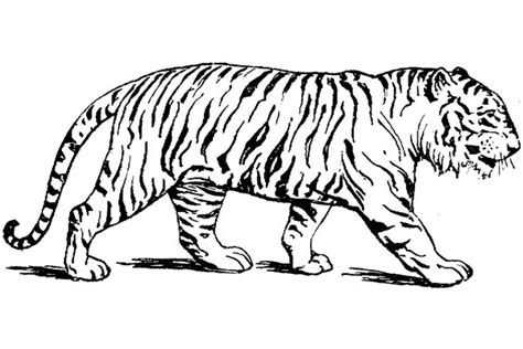 tiger malarbilder malarbok malarbilder princessor