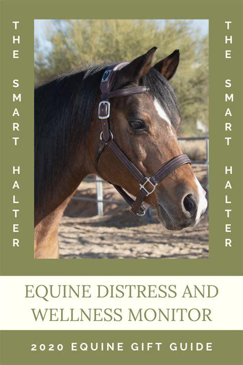 horse human equine halter