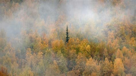 Yukon Fall Bing Wallpaper Download