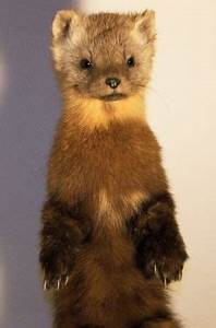 17 Best images about taxidermy on Pinterest | Wall mount ...