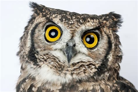 live owls dropped from harry potter and the cursed child