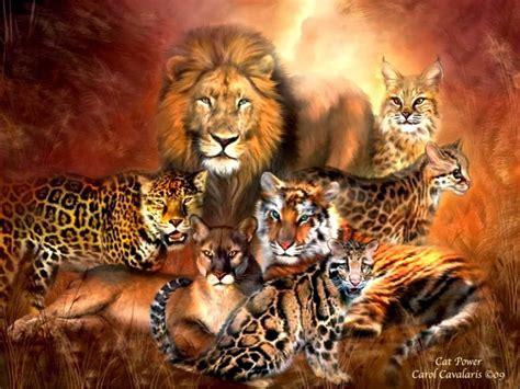 Blog Fuad Informasi Dikongsi Bersama The Big Cat Species