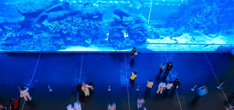 aquarium entry fee dubai mall fish aquarium entry fee wroc awski informator internetowy wroc aw wroclaw