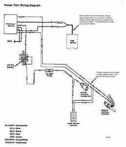 78 Evinrude 3 Wire Tilt  Trim Wiring Page  1