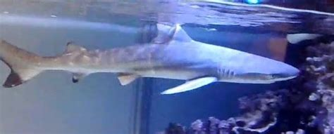 why you should not keep a saltwater shark in an aquarium