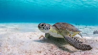Turtle Underwater Sea Pantalla Animales Fondo Tortuga