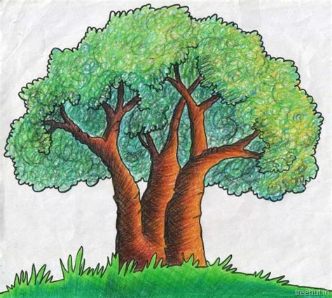 tree shading techniques  crayons