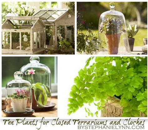 best plants for closed terrarium ten plants to grow in closed terrariums under cloches
