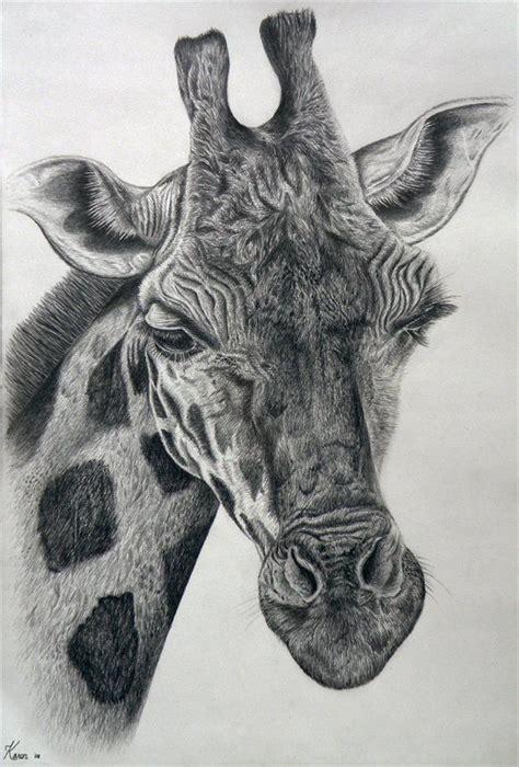ideas  baby giraffe tattoo  pinterest