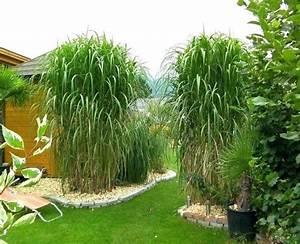 Sichtschutz Pflanzen Pflegeleicht : garten sichtschutz mit pflanzen ~ A.2002-acura-tl-radio.info Haus und Dekorationen